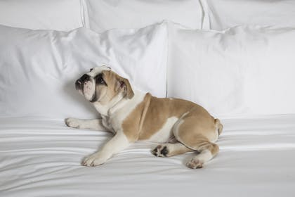 Pet Friendly | HGU New York